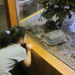 We love tortoises